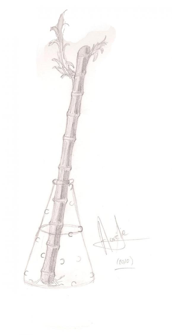 http://dessins-d-aura.cowblog.fr/images/bamboodessin.jpg